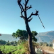 A Trip To Mahabaleshwar -  A Tree
