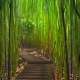 Amazing Forest Wallpaper (19)